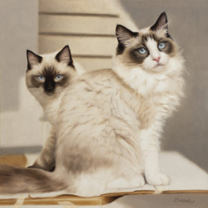 two seated cats