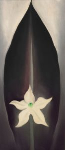 a black leaf and white flower